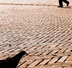 walking beside a pigeon sienna