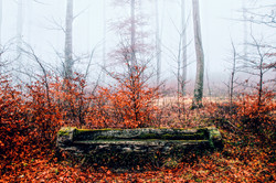 The forest of cheseaux and the Bench