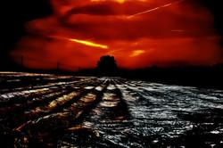 sunset and tree and field oberglatt ruml