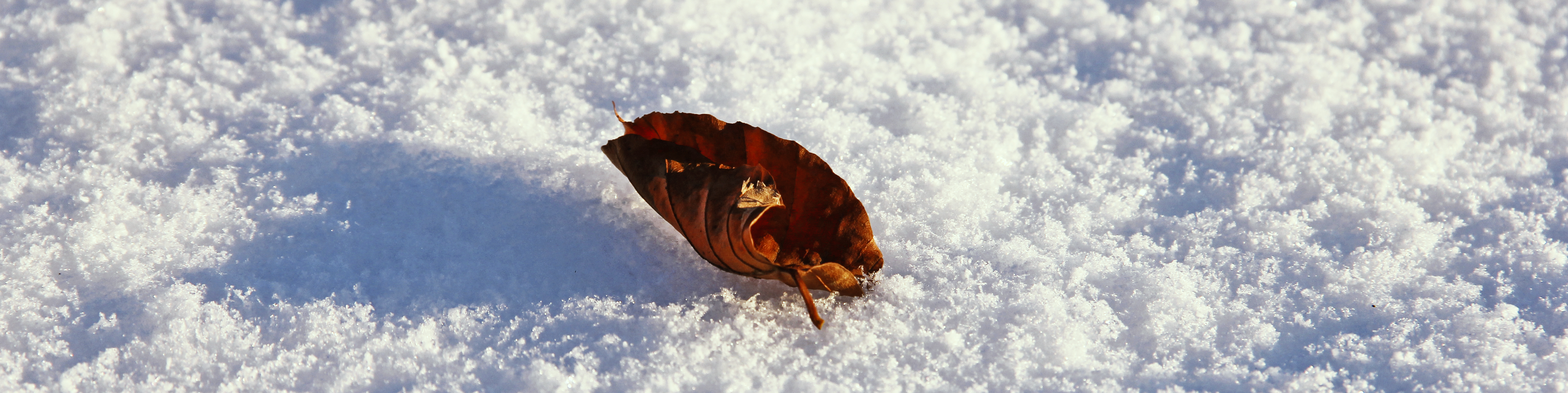 heart leaf snow