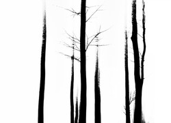 Fog and trees Cheseaux_Dec2017