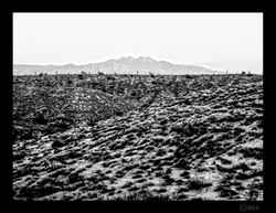 WDILTBT_A Landscape I am not used to