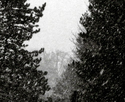 Snowing softly walking smoothly