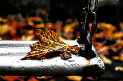 Leaf_alone_on_a_balançoir_(1)