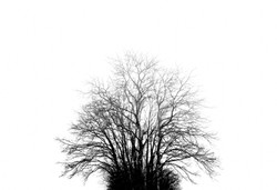 The dead trees