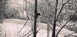 Sad crow Irchel