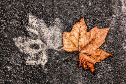 bivalent leaf
