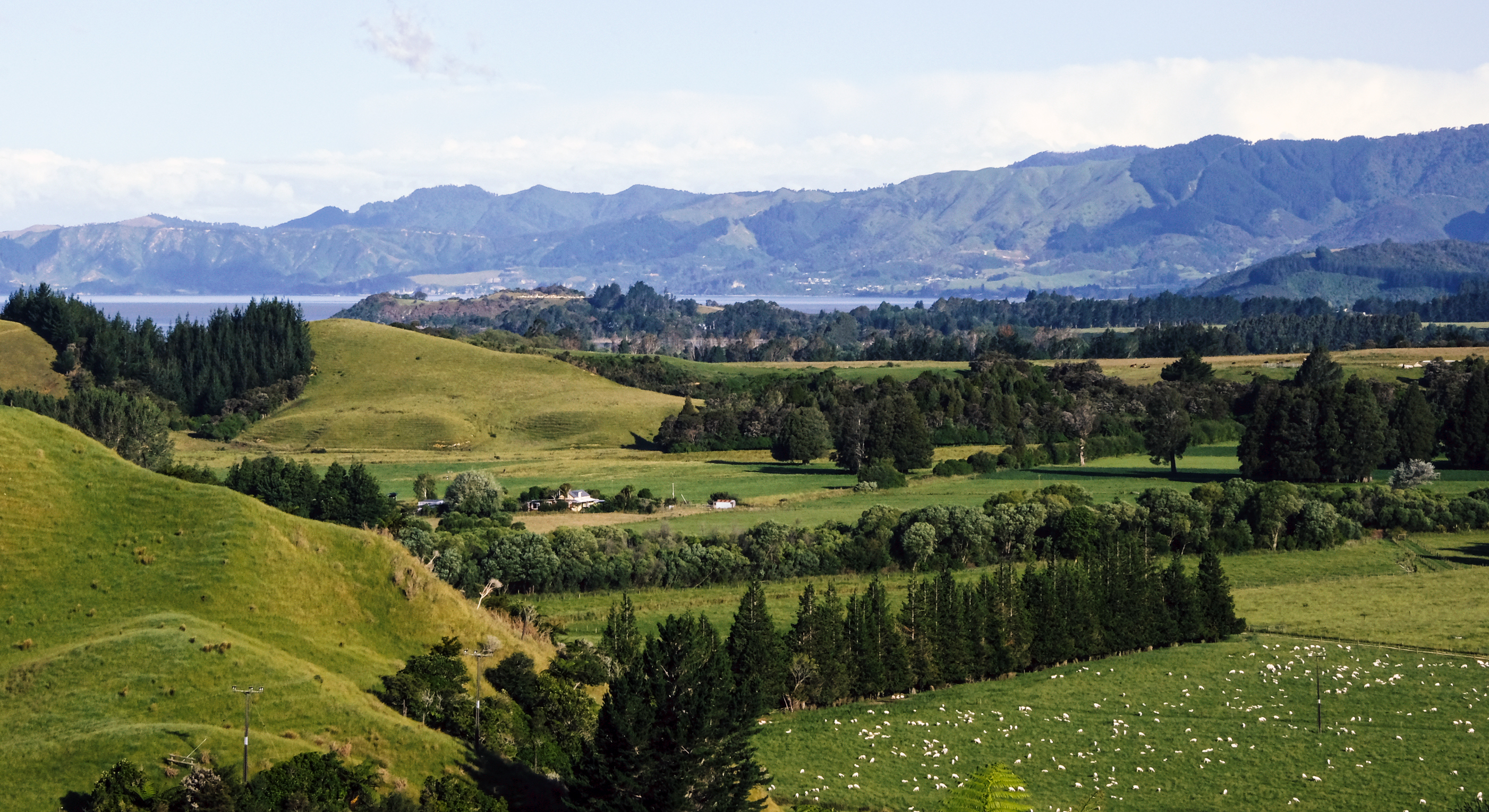 Real New Zealand
