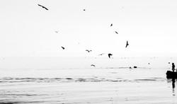 imaging birds