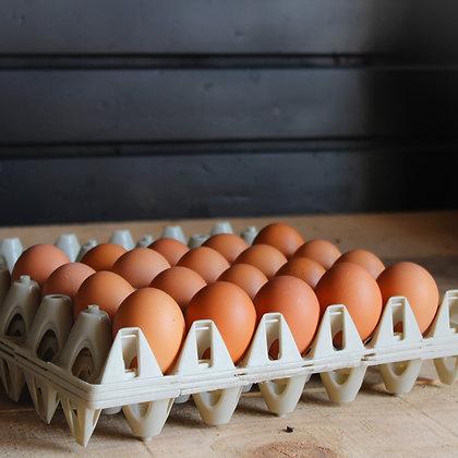 Verse scharrel eieren 10 stuks