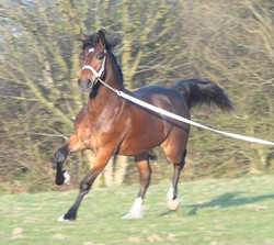 Equine Auctions