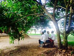 Sous le manguier
