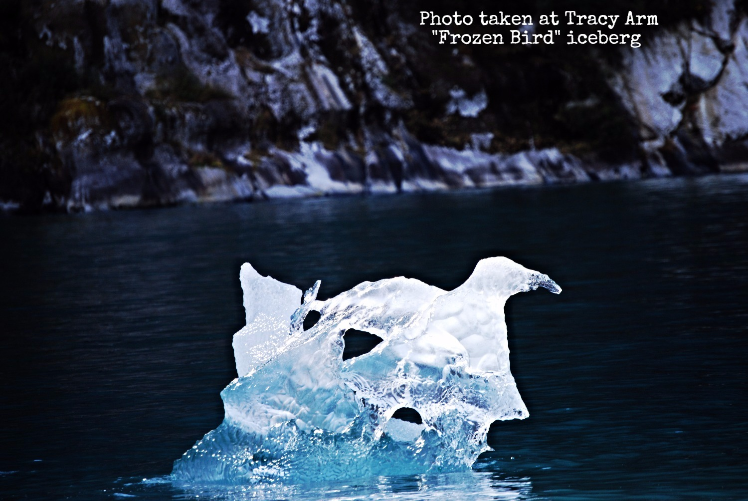 Frozen Bird - Tracy Arm