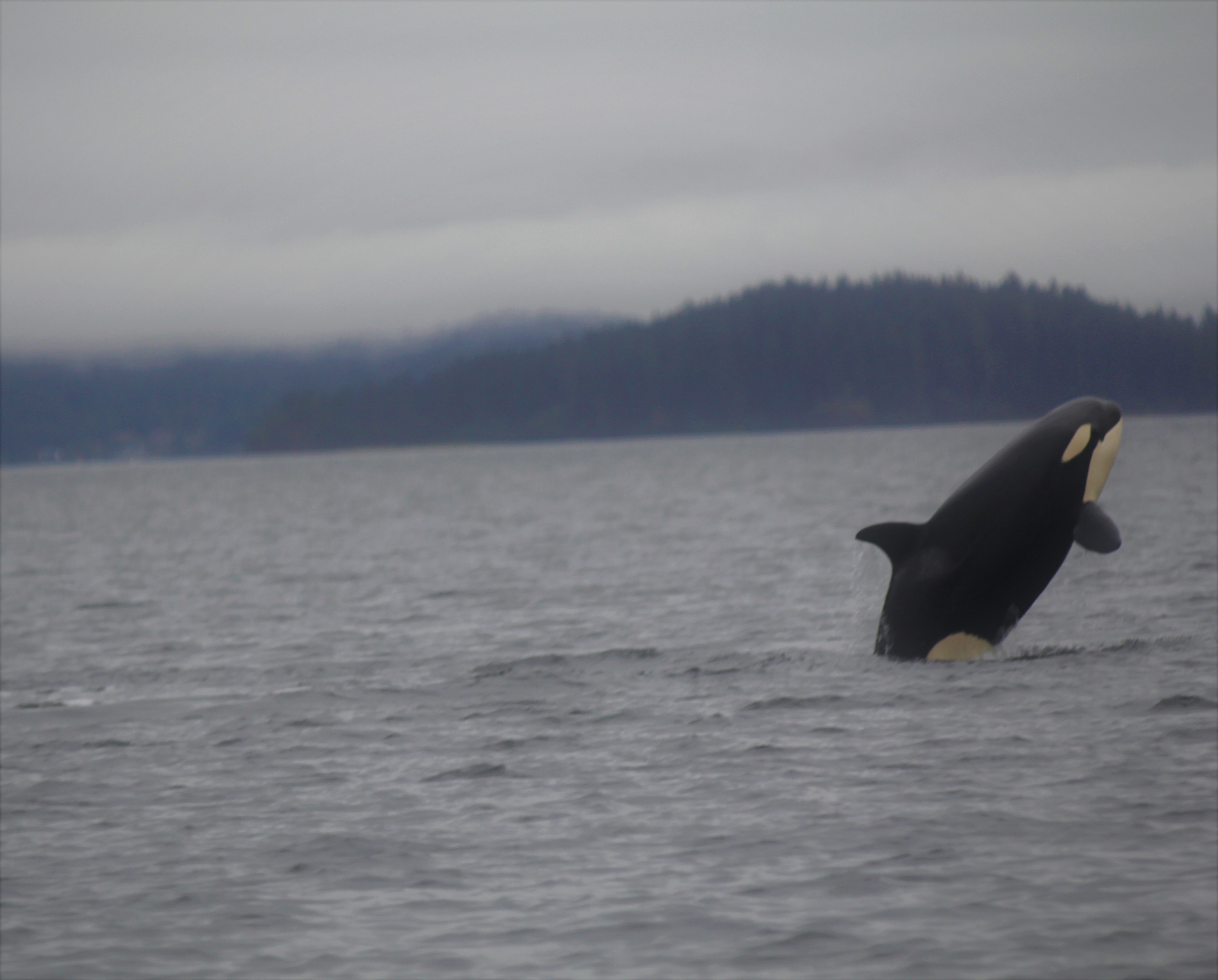 orca breach (2)