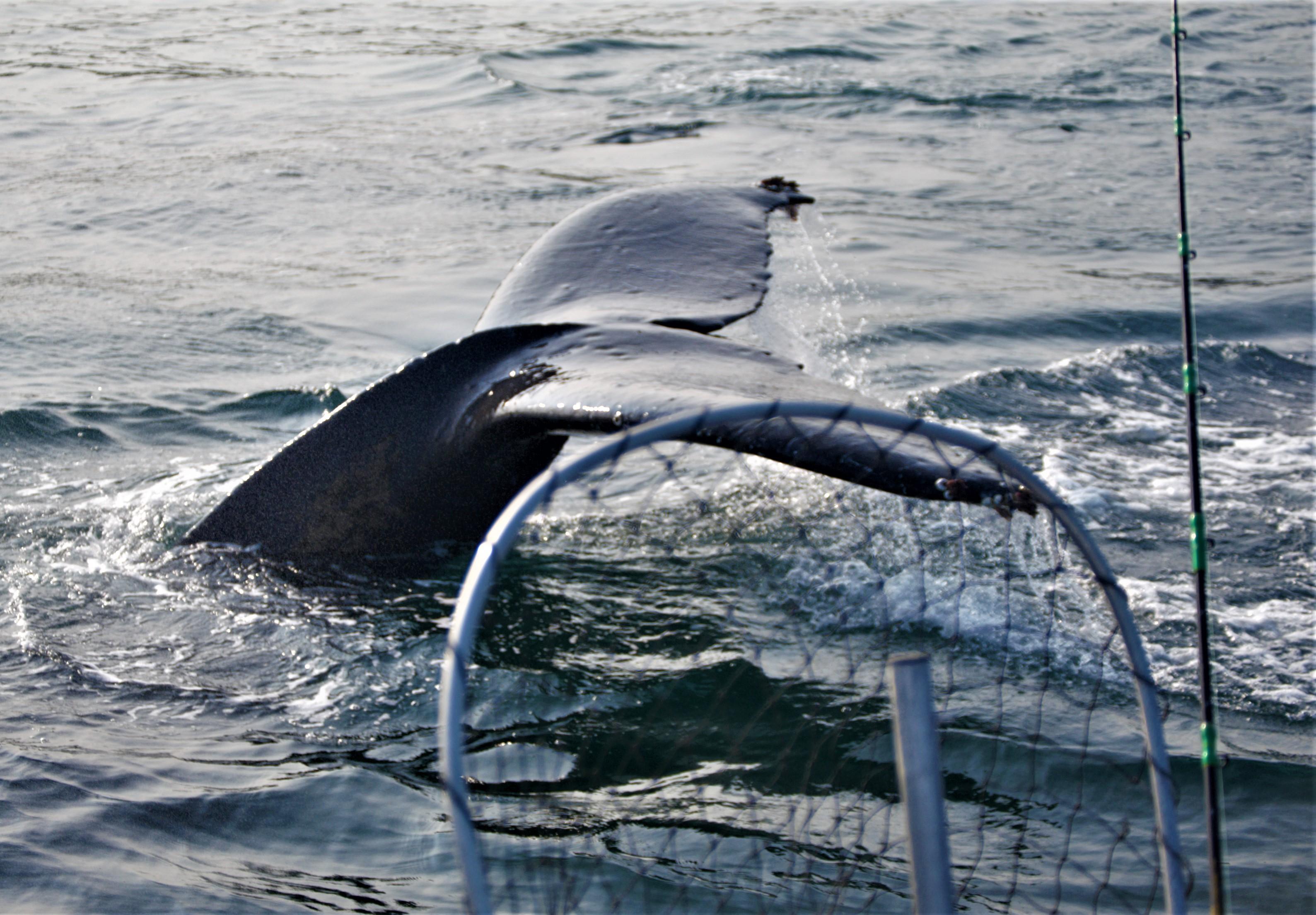 Close Humpback encounter
