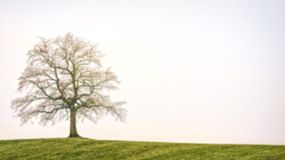 tree-3224754_1920.jpg