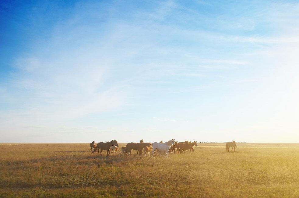 steppe-4102069_1920.jpg