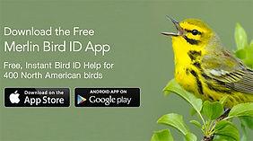 Merlin Bird App.jpg