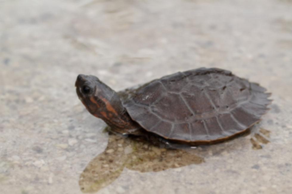 turtle-1134862_1920.jpg