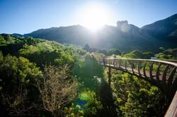 CTT_Kirstenbosch-Boomslang_cLisa-Burnell-11-e1486371768970