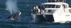 2.-Feature-boat-and-whale-low-res-cropped-new