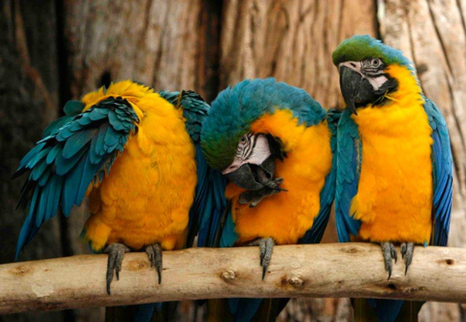 world-of-birds_940_650_85_s_c1_c_c