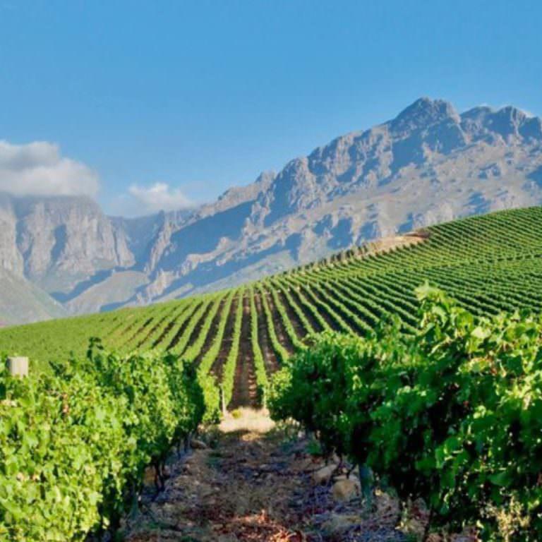 Stellenbosch-landscape-e1471358871757-768x768