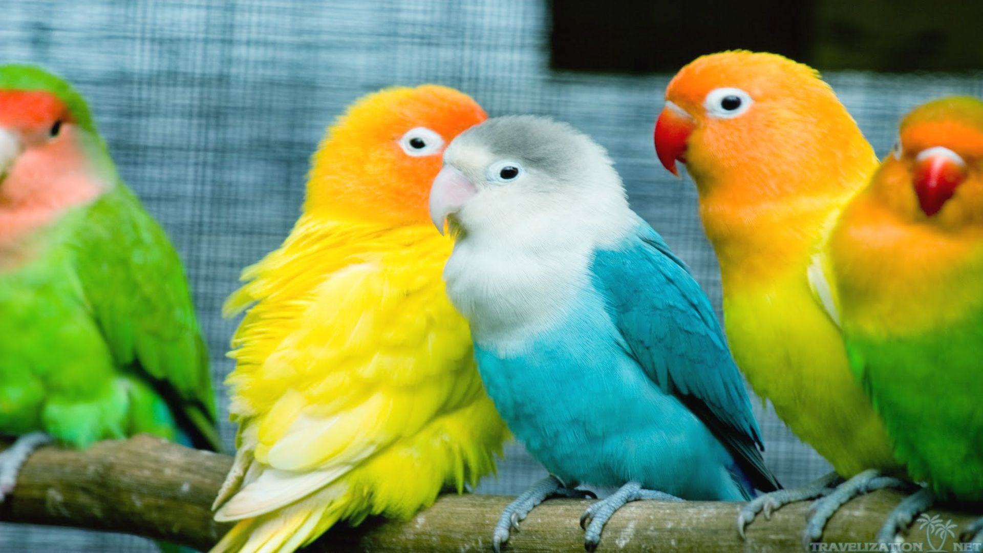 colorful-world-of-birds-wallpapers-1920x1080