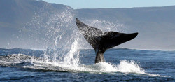 Whales-1