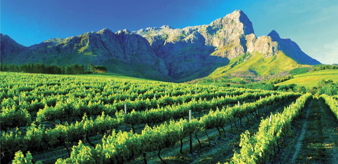 winelands-full-day
