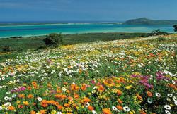 Postberg-flower-reserve-holiday-guest-house-langeb