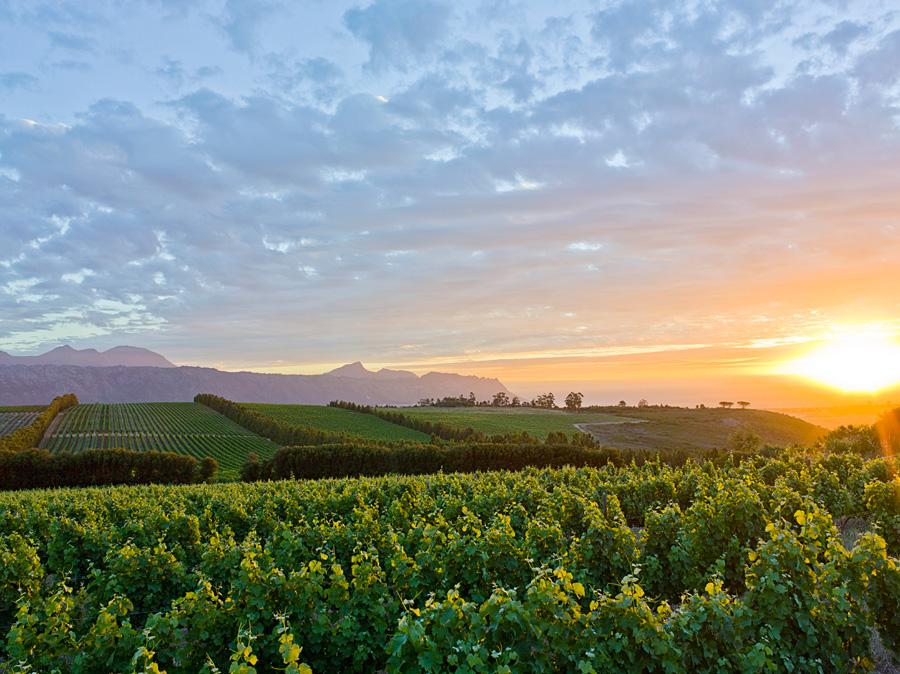 Cape-Town-Wine-Route