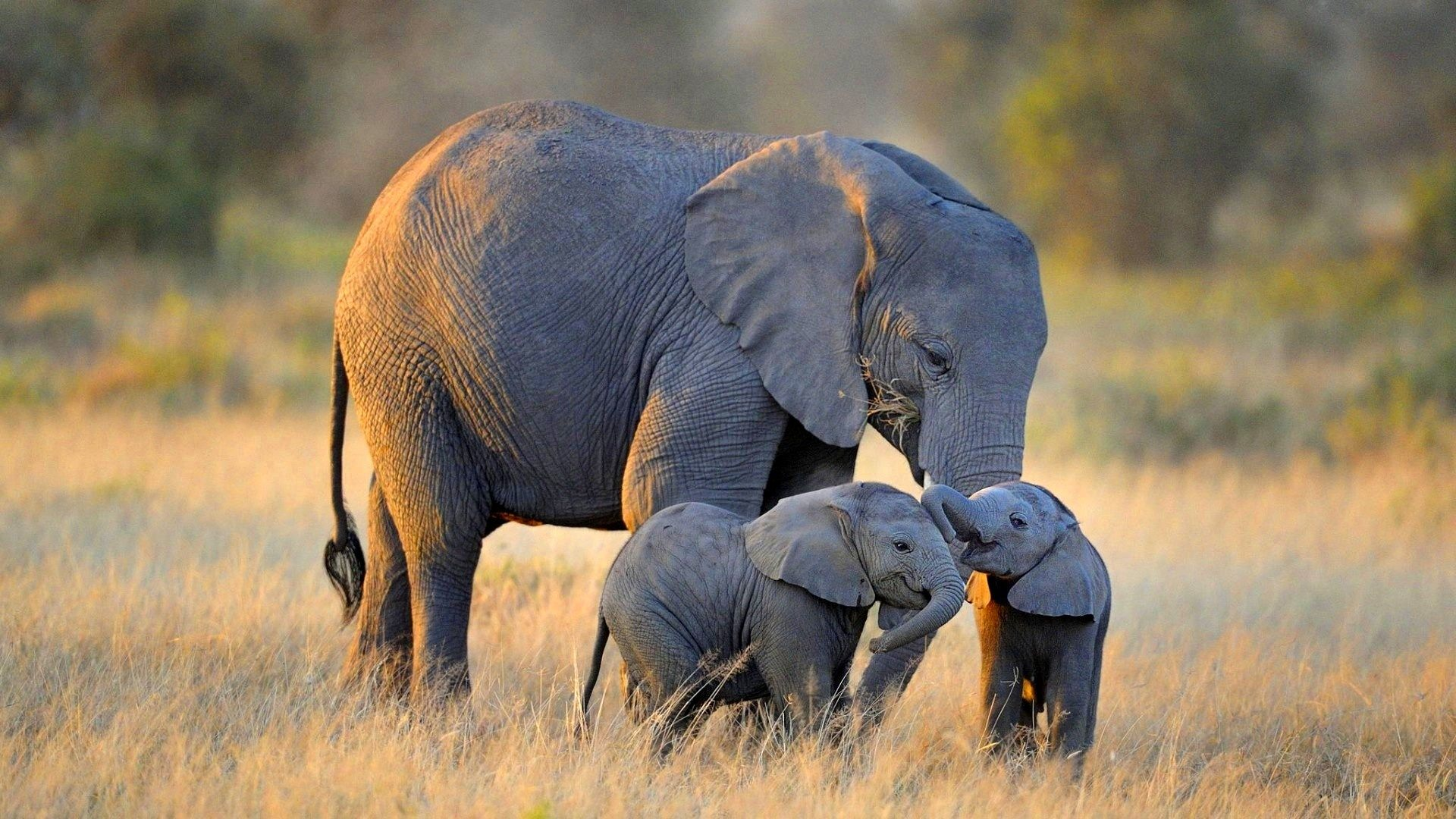 baby-elephant-wallpaper-15