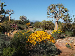 attractions682x512_25697527_karoo-desert-national-botanical-garden_4