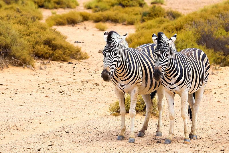 Safari Aquila Tour