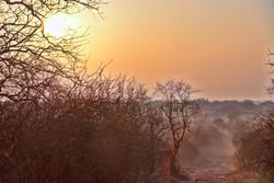 african-bush-sunrise-2-1