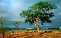 ws_Kruger_National_Park_1920x1200
