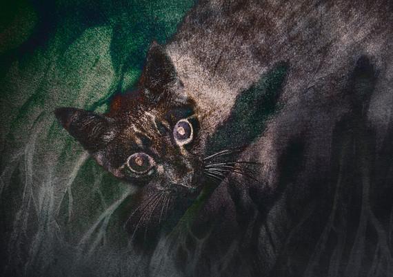 Ferile Cat