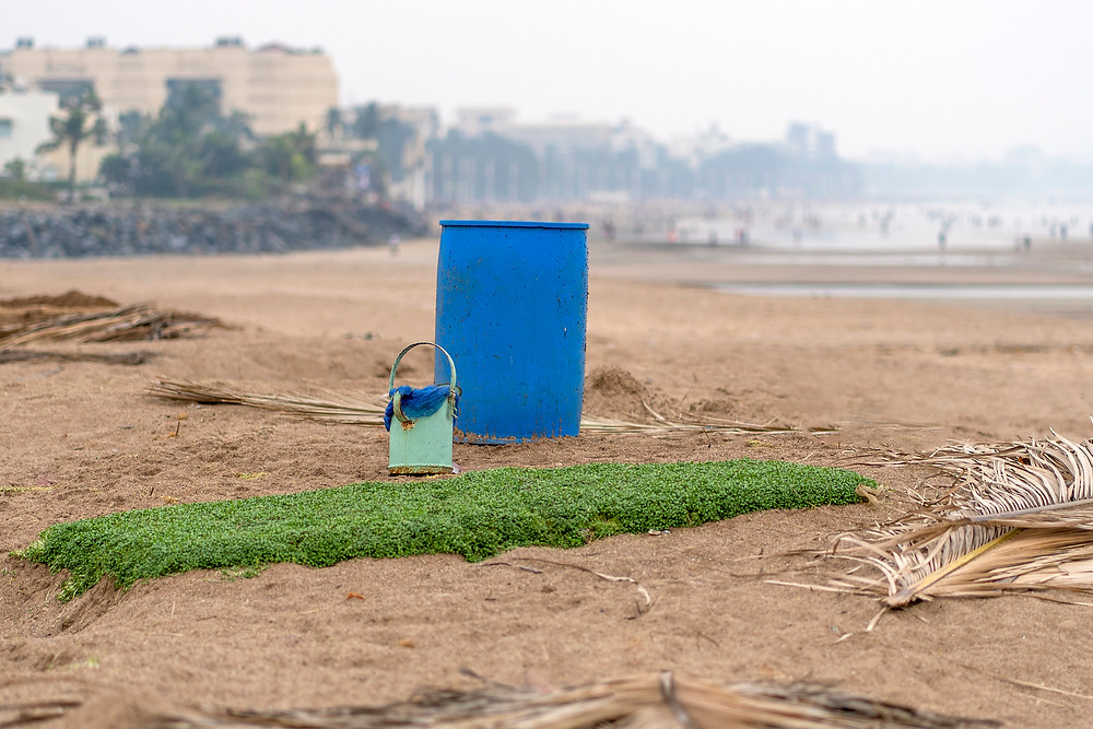Methi farming on the north Juhu Beach shoreline