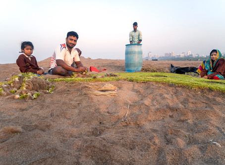 The Last Methi Plot At Versova Beach