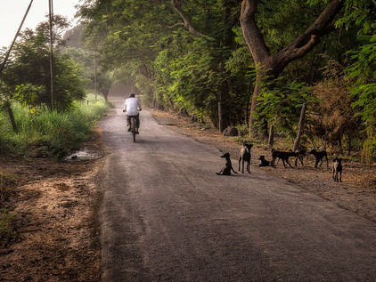Blog #2: My Favorite Road in the World is in Mumbai - And It Has No Name