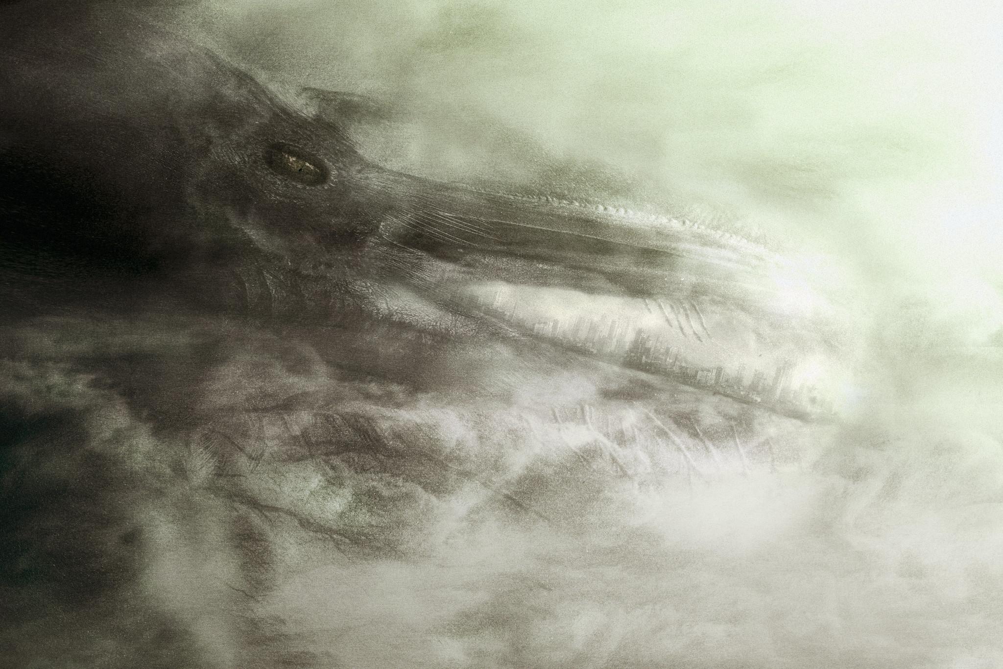 Corvus-19