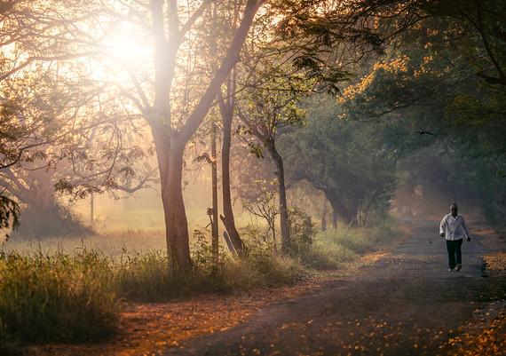 Aarey Walk.jpg