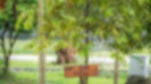 Sinar Eco Resort Agriculture