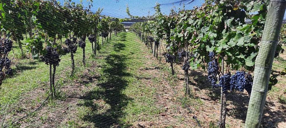 encuentro vitivinicola provincia de buenos aires