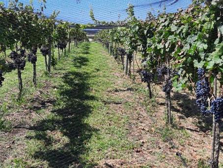 De las sierras al Atlántico, todos los vinos bonaerenses en un solo lugar