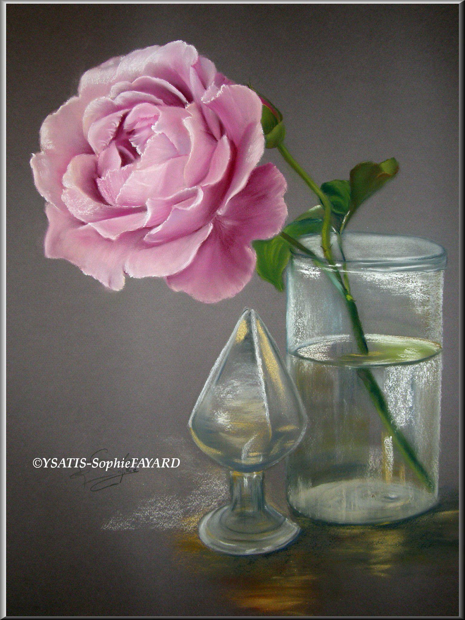 Rose Poudrée