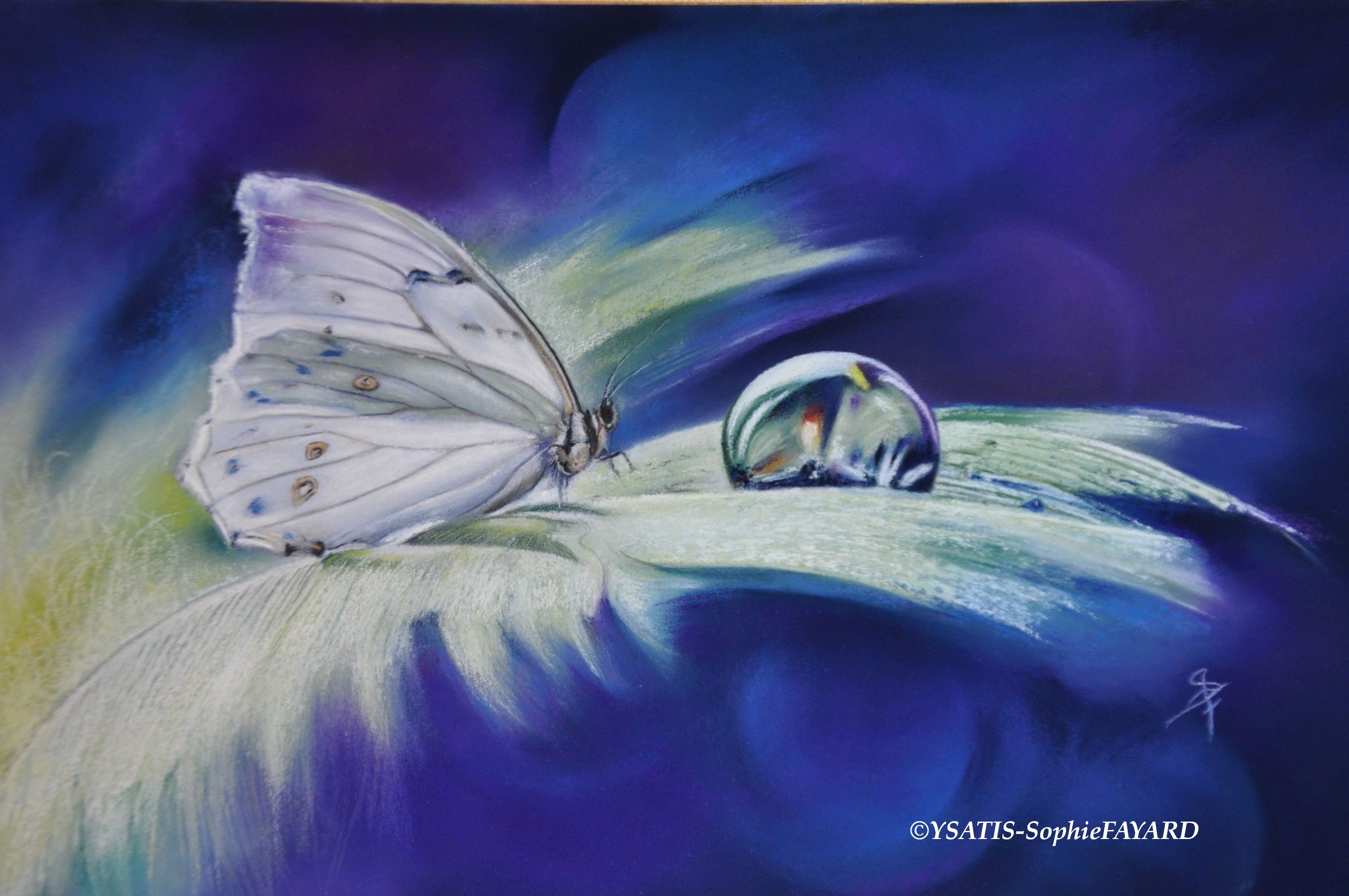 Le papillon craint de la brisée