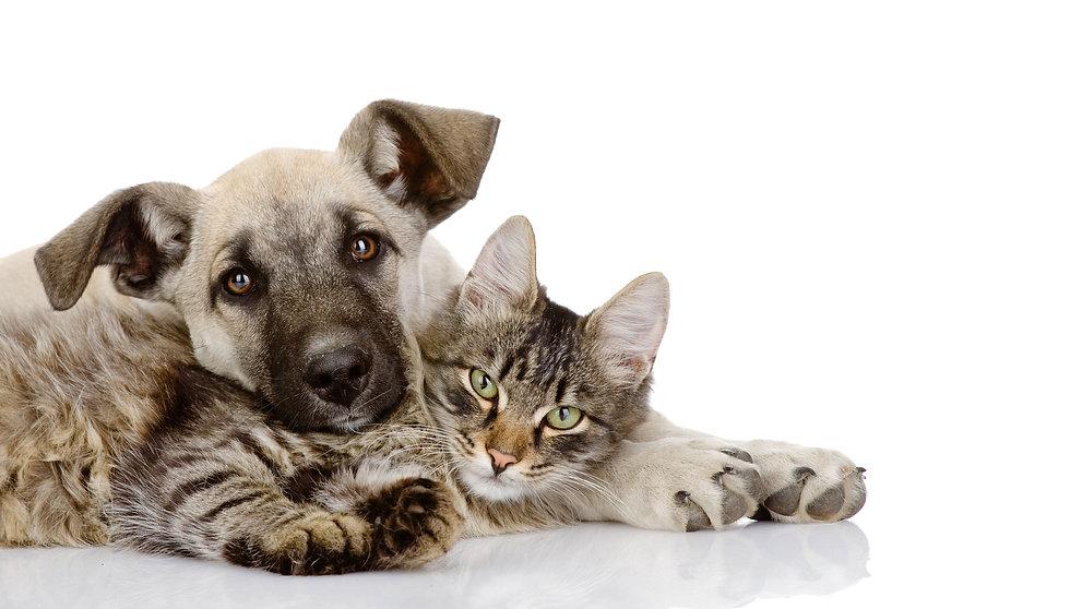 Hund-Katze-Start-WEB4.jpg