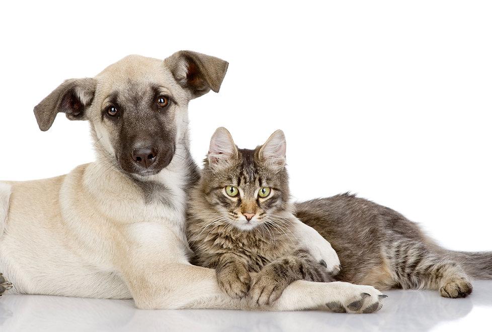 Hund-Katze-Start-Web.jpg